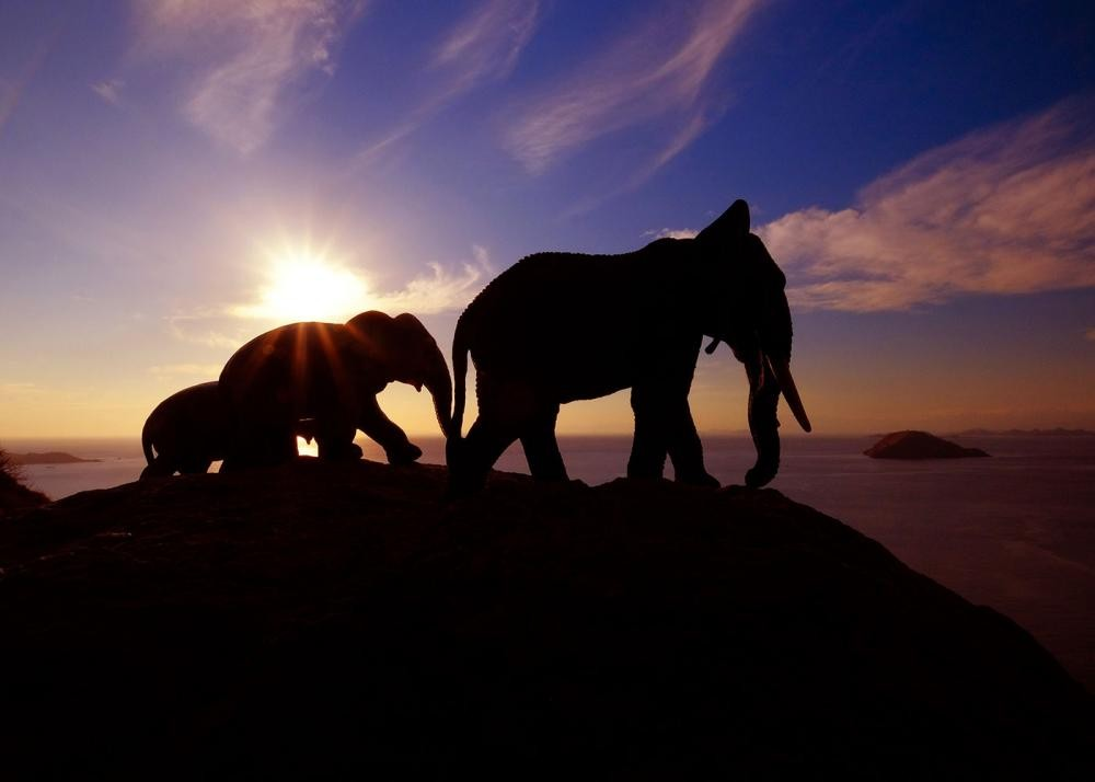 FAMILY OF ELEPHANTS AT DUSK